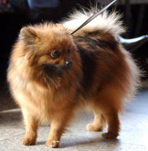 Cudowna Małe psy – rasy psów małych cz.1 | Blog | Sklep zoologiczny E LH87